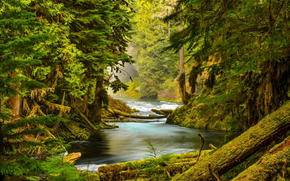 nature, river, stones, moss, trees, forest