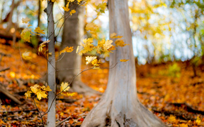 yellow, forest, foliage, BRANCH, trees, nature, autumn, leaves