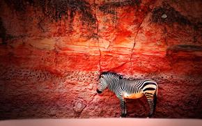 zebra, wall, stone