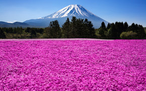 nature, Fuji, Japan, mountain, volcano