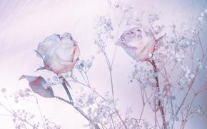 Hintergrund, Roses, Schattierungen von blau