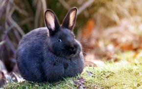 природа, трава, кролик, уши, шерсть