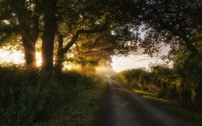 树, 光, 道路, 阳光, 灌木, 夏天, 性质, 草, 太阳