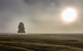 albero, nebbia, campo, mattinata