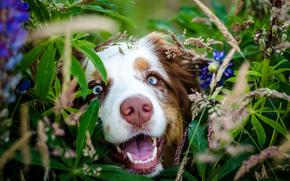 морда, листья, Собака, цветы, нос, взгляд