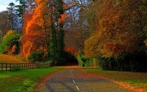 campo, alberi, stradale, autunno, fogliame, foresta, natura