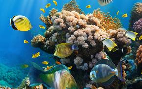 Underwater World, fish, coral reef, ocean