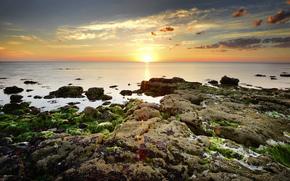 黎明, 海, 藻类, 石头, 海怡, 太阳