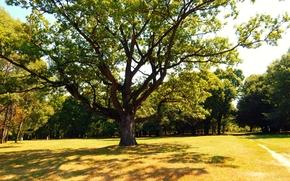 shadow, Oak, BRANCH, summer
