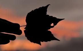 любовь, фон, листик, размытие, сердечко, листья, настроения, широкоэкранные, обои, силуэт, рука, полноэкранные, сердце, широкоформатные, листочек