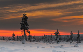 chiaro, cielo, alberi, inverno, nuvole, nevicata