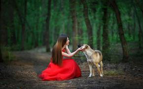 дружба, девушка, собака, лес, красное платье