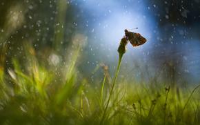 herbe, pissenlit, pluie, gouttes, domaine, éblouissement, papillon