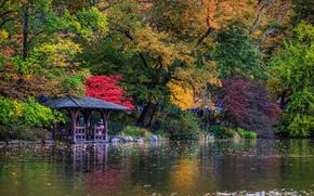 New York, alberi, autunno, lago, pergolato, Central Park
