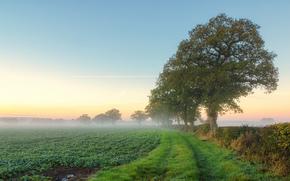mañana, verano, árboles, campo, niebla