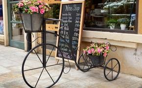 Stand, flowerpot, bike, Flowers, city, showcase, window, pink