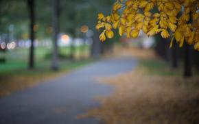 блики, дерево, Иллинойс, макро, размытость, вечер, город, желтые, парк, США, Чикаго, осень, листья