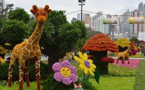цветочки, цветы, клумба, гриб, жираф
