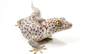 background, lizard
