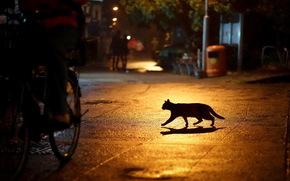 città, notte, luci, gatto, silhouette, strada
