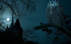 halloween, civetta, notte, castello, plenilunio
