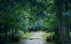 reflexión, Bancos, parque, después de la lluvia, árboles, charcos
