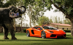 отражение, слон, Lamborghini, деревья, здание, авентадор, вид спереди, оранжевый, ограждение, ламборгини