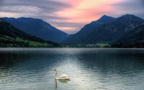 горы, Бавария, озро, закат, Тегернзее, лебедь