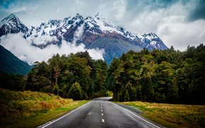 горыдеревья, зелень, природа, дорога, ели, туман, обои