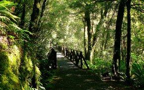 foresta, ponte, alberi, natura