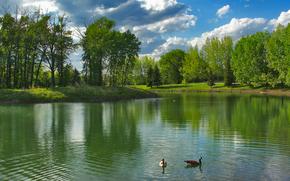 piccolo fiume, Oche, alberi, cielo, paesaggio
