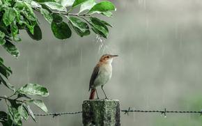shower, rain, birdie, drops