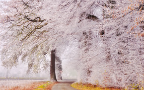 autumn, frost, park, road, trees