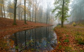 foresta, alberi, autunno, pond, natura