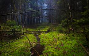 foresta, muschio, alberi, torrente, natura