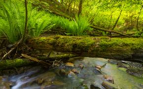 piccolo fiume, torrente, alberi, pietre, piante, natura