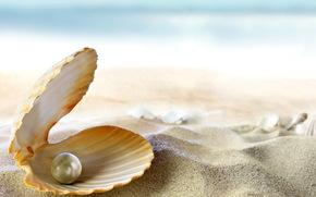 mare, spiaggia, tropici, oceano, Perla, sabbia, sole, conchiglia