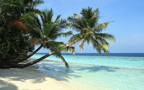 sea, sand, Palms, tropics, beach