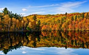 湖, 秋, 森, 木, 風景