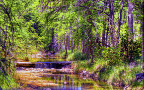 Texas Hill, small river, forest, trees, nature