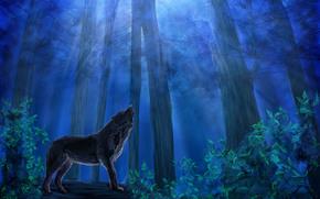 cielo, foresta, pittura, Suora, predatore, fogliame, lupo, alberi, notte, animale, blu