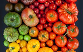 томаты, разноцветные, помидоры