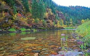 река, лес, деревья, камни, пейзаж