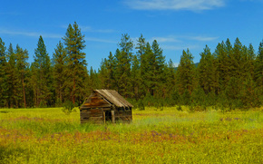 field, cabin, forest