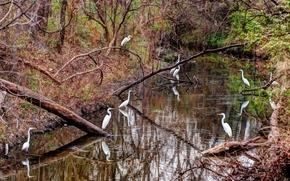 river, forest, Cranes, nature