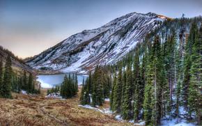 lago, Montañas, árboles, paisaje, San Juan National Forest, Colorado