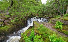 fiume, cascata, Rocce, alberi, natura