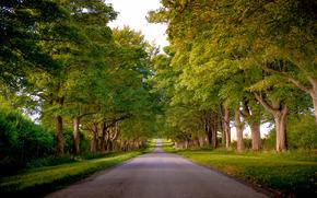 国王大道, 桑德灵厄姆, 诺福克, 英国, 道路, 树, 景观