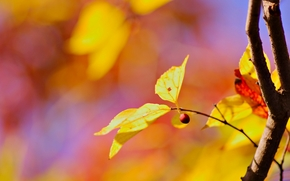 fogliame, giallo, Widescreen, sfondo, albero, Macro, ramo, volantino, degradazione, carta da parati, fogliame, Widescreen, fullscreen
