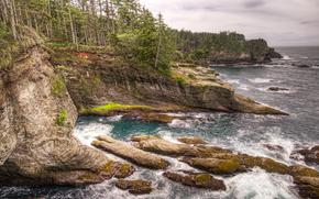 Cape Flattery, Washington, mar, Rocas, árboles, costa, paisaje